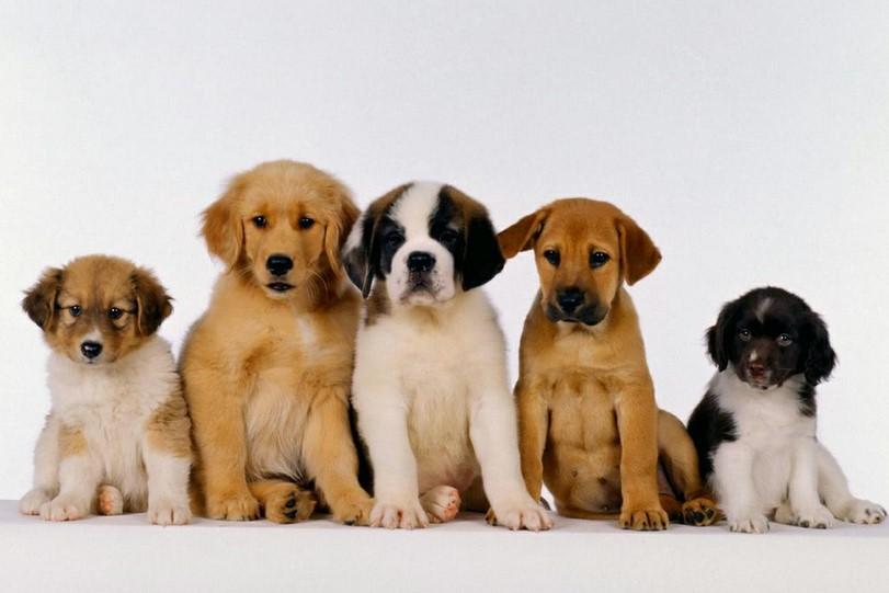 Registo e Licenciamento de Animais